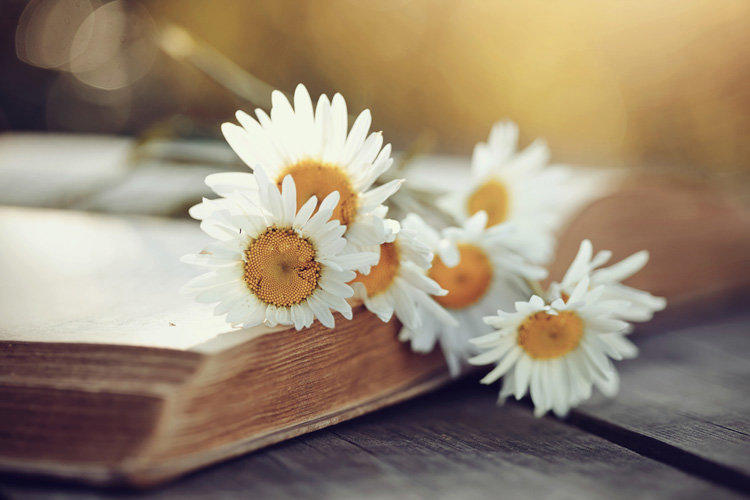 The use of chamomile pharmaceutical: properties and contraindications
