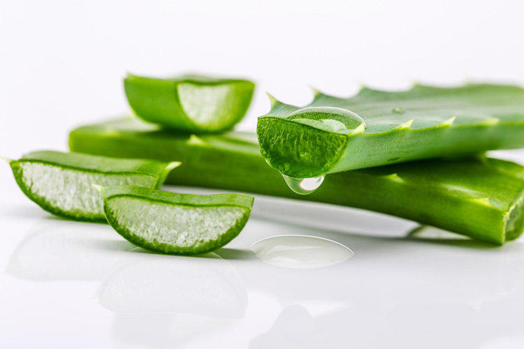 Aloe vera: medicinal properties and contraindications