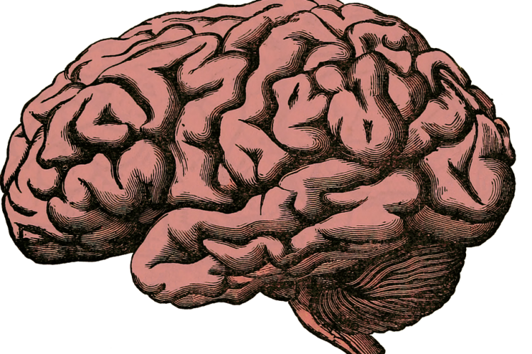 New studies of brain injuries may discover alternative treatment methods